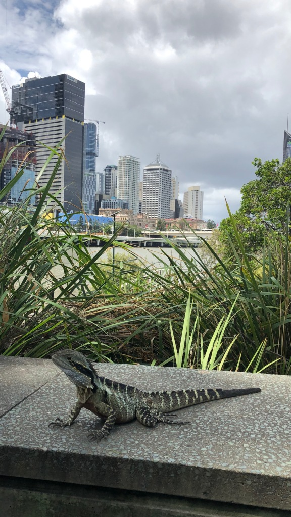 A lizard standing on a stone bench in front the Brisbane river and the city skyline beyond.